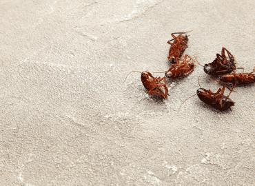 Cinco pontos importantes na hora de realizar a dedetização de baratas